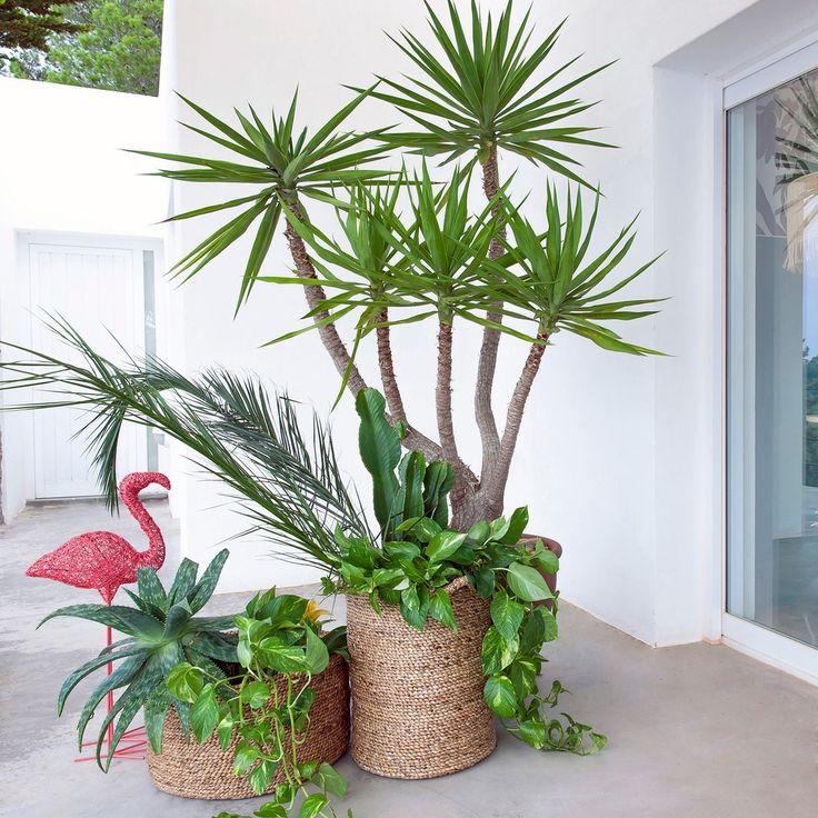 urban jungle plante verte d 39 int rieur et cache pot d co terrasse d co pinterest plantes. Black Bedroom Furniture Sets. Home Design Ideas