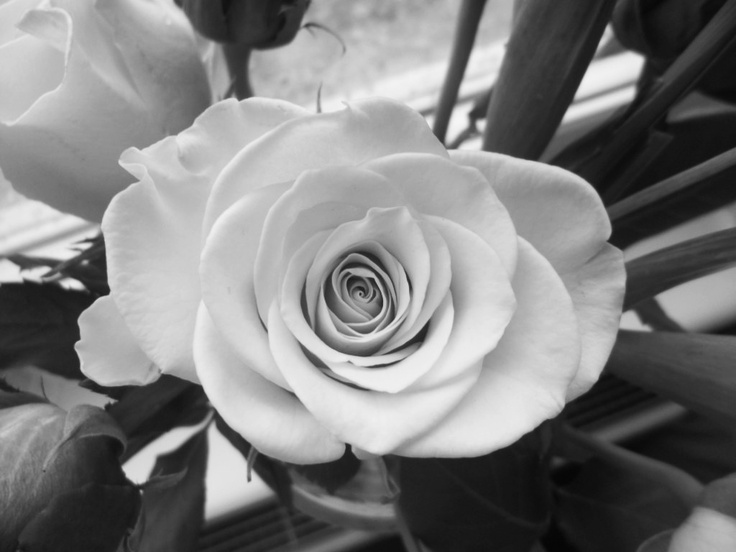 Black and White rose.