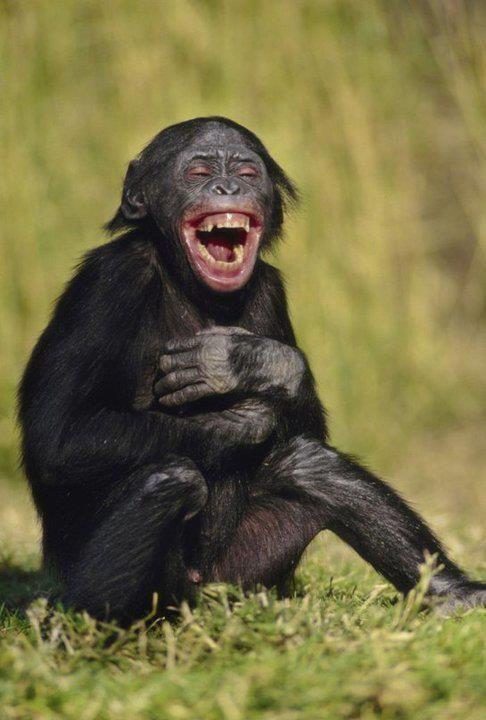 .Cheeky monkey ..lol...