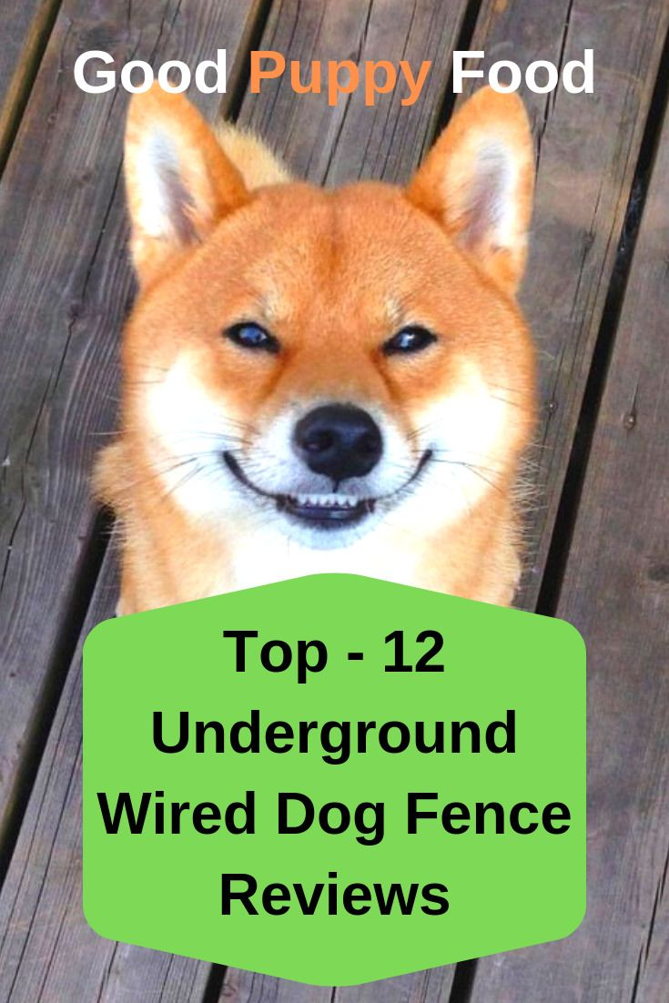 Electric Fence Best Puppy Food Puppies Dog Fence