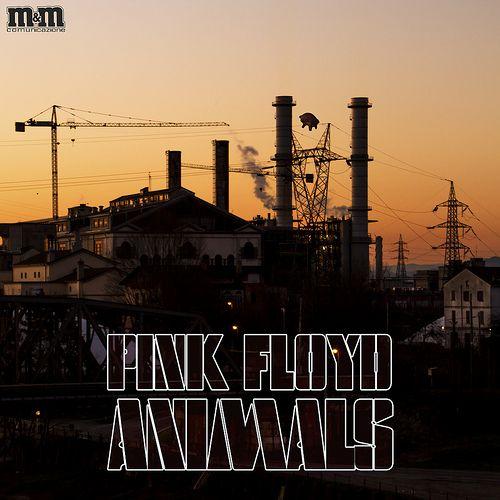 PINK FLOYD - animals (cover rivisitata)  ® Massimo Mazzoni