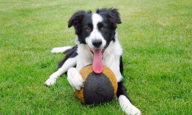 La importancia del juego para el perro