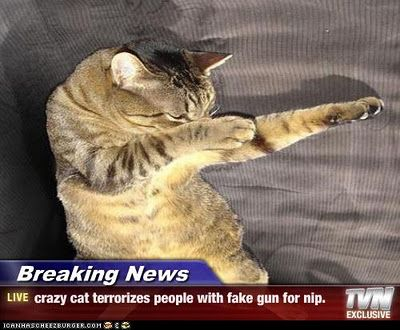 funny cat pictures with captions | funny cat pictures with captions (52) --- Im almost sure this could happend