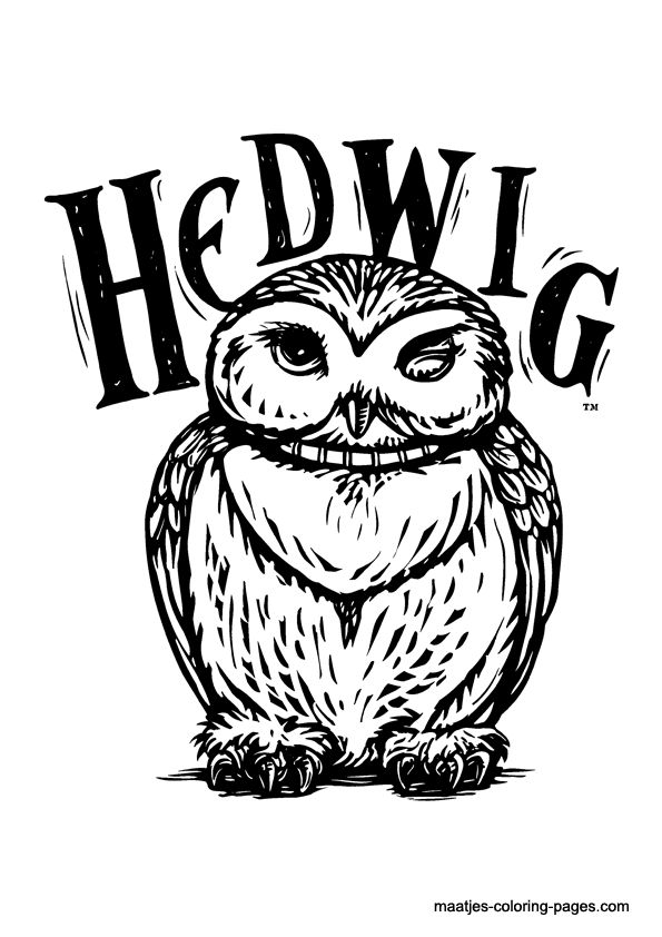 Hedwig owl colouring page find this pin and more on colorir harry potter