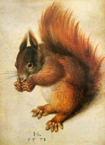"""""""Red Squirrel"""" (1578) - Hans Hoffmann, (an imitator of Albrecht Dürer) National Gallery of Art"""