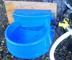 Using a dog bowl as a chicken auto waterer