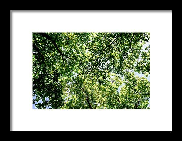 Tree Branches And Leaves On Summer Blue Sky Framed Print