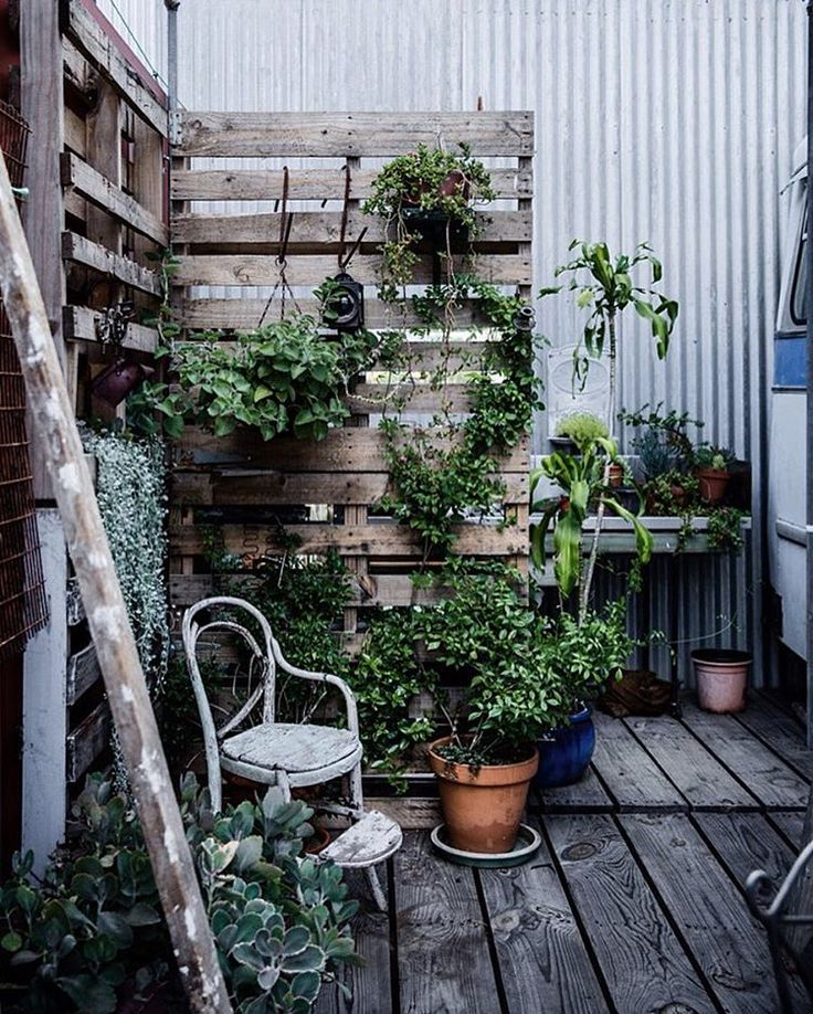 #balcony #outdoorspace #backyard #garden #trellis #gardentrellis #gardenscreening #gardenscreen #バルコニー #庭 #ガーデン #トレリス