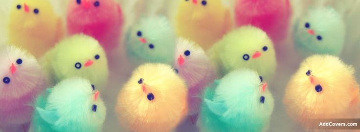 Easter Chicks Facebook Covers