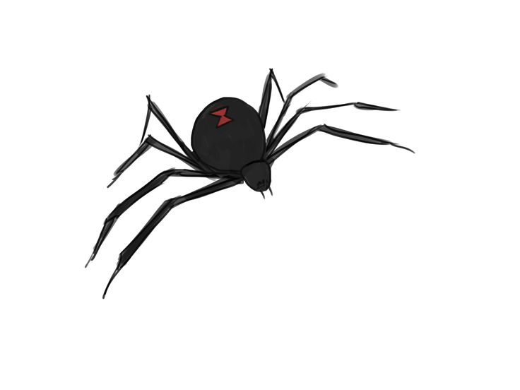 7 best Spiders images on Pinterest | Spider drawing ...