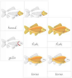 The Helpful Garden: Parts of the Fish Nomenclature Cards