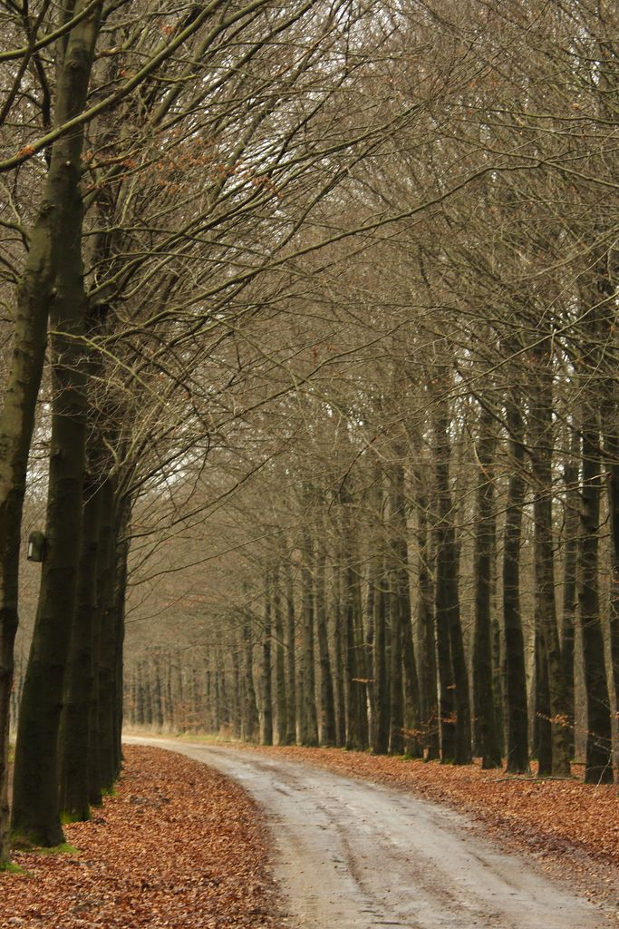 Bomen langs het pad