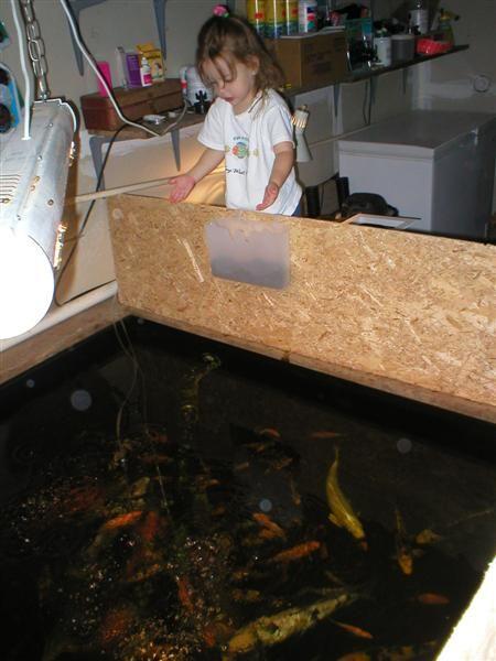 Bickal Koi Farm How To Build An Indoor Koi Pond Koi Pond Water Gardens Fountains