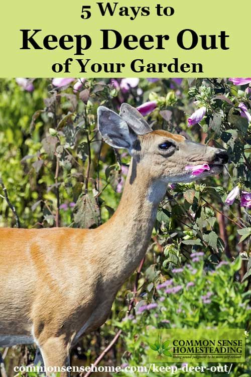 Keep deer out of your garden or yard and protect your harvest with deer deterrent options for every location and budget range.
