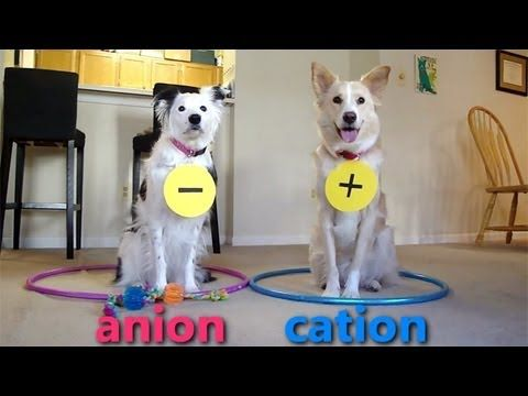 Dogs teaching chemistry! I UNDERSTAND IT NOW
