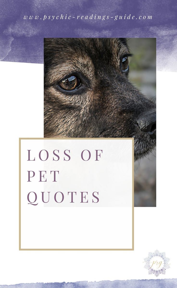 Loss Of A Pet Quote The 25 Best Loss Of Cat Quotes Ideas On Pinterest  Dog Loss
