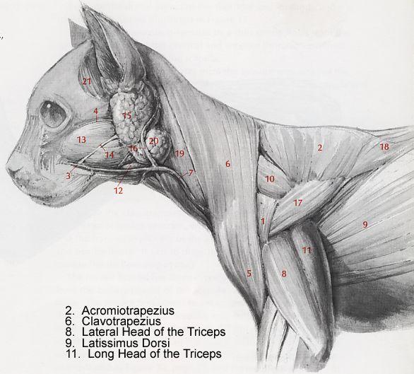 200 best vet images on Pinterest | Horse anatomy, Veterinary ...