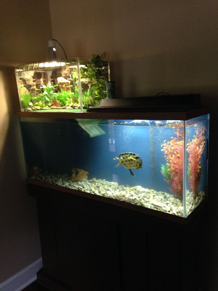 The 25 best ideas about turtle aquarium on pinterest for Fish tank turtles