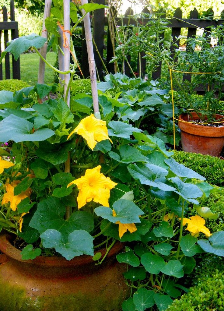 July. Moreover, if you live in a frost-free subtropical or tropical climate, you can grow it almost all the year.