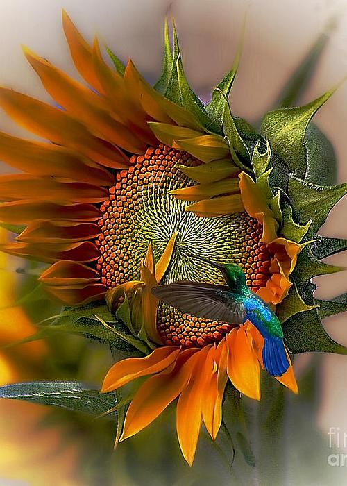 A Moment In Time Greeting Card by John Kolenberg - Sunflowers