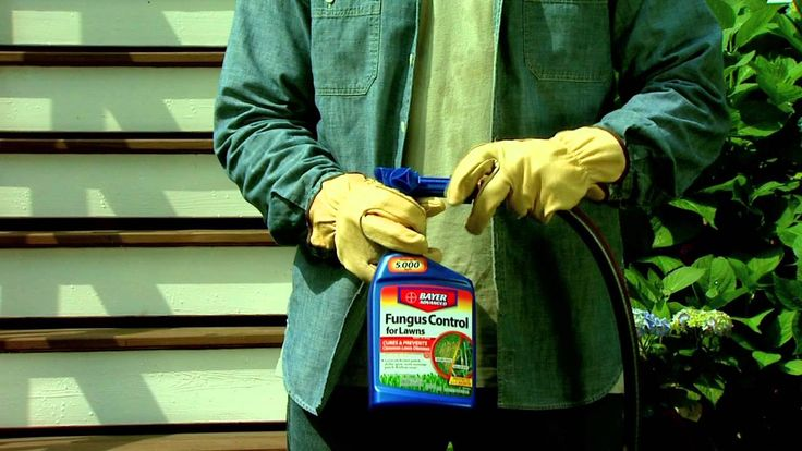 How To Use Fungus Control for Lawns   Bayer Advanced