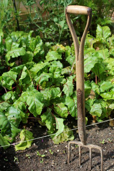 In the vegetable garden...