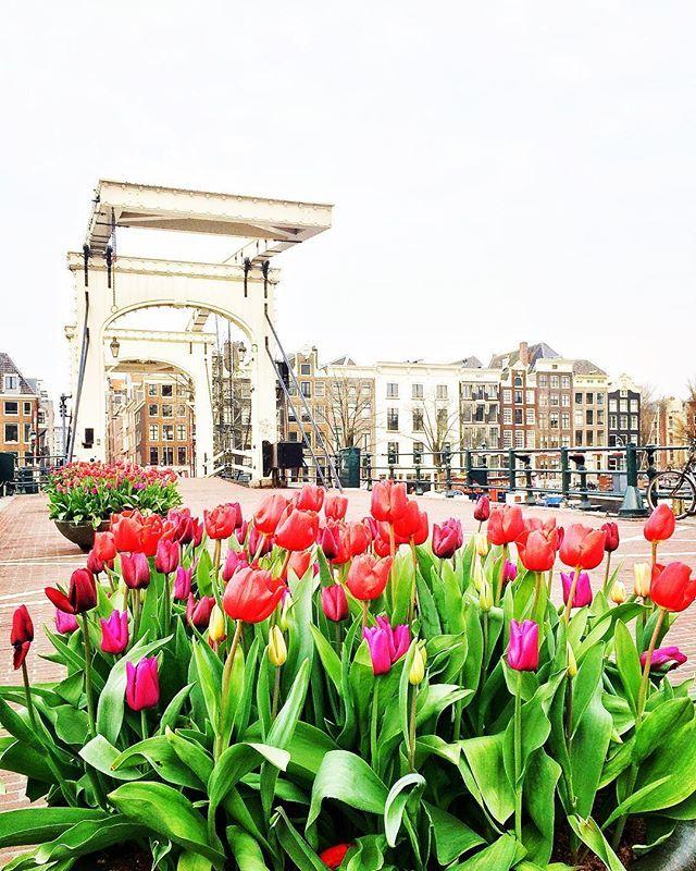 Want als de lente komt....   Holy Moly Amsterdam wat ben je toch mooi!