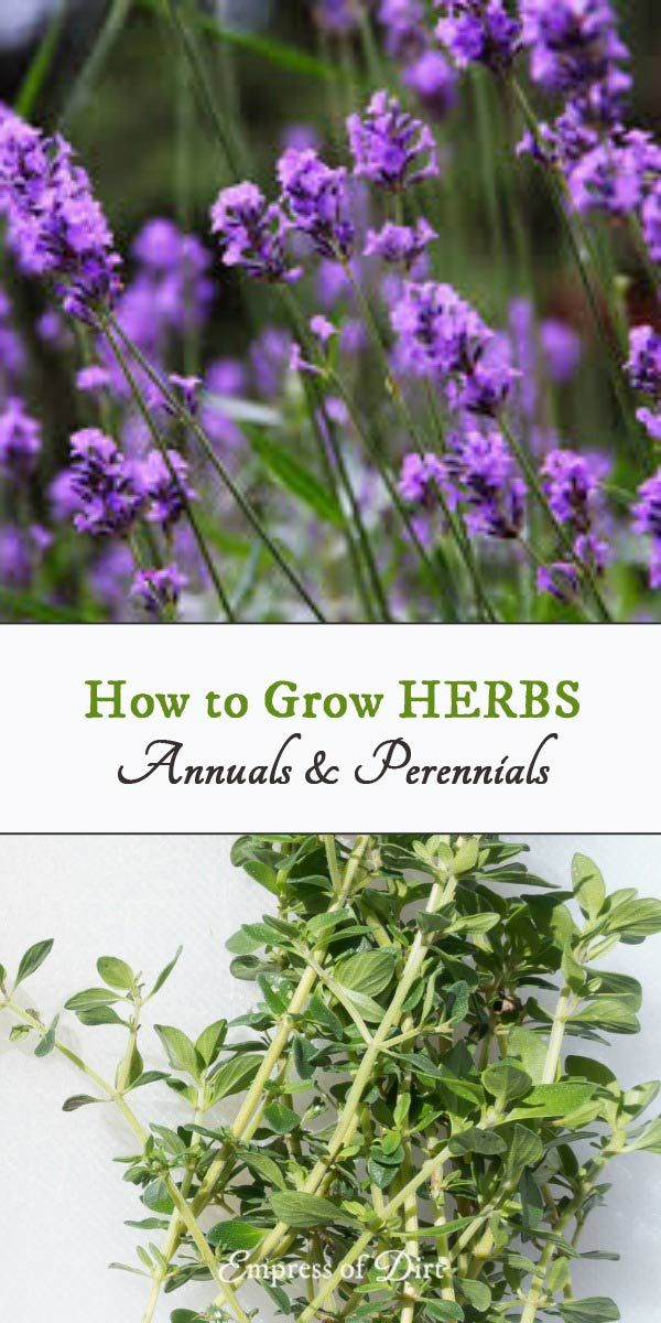 How To Grow Herbs Outdoors Beginner S Guide Organic Gardening
