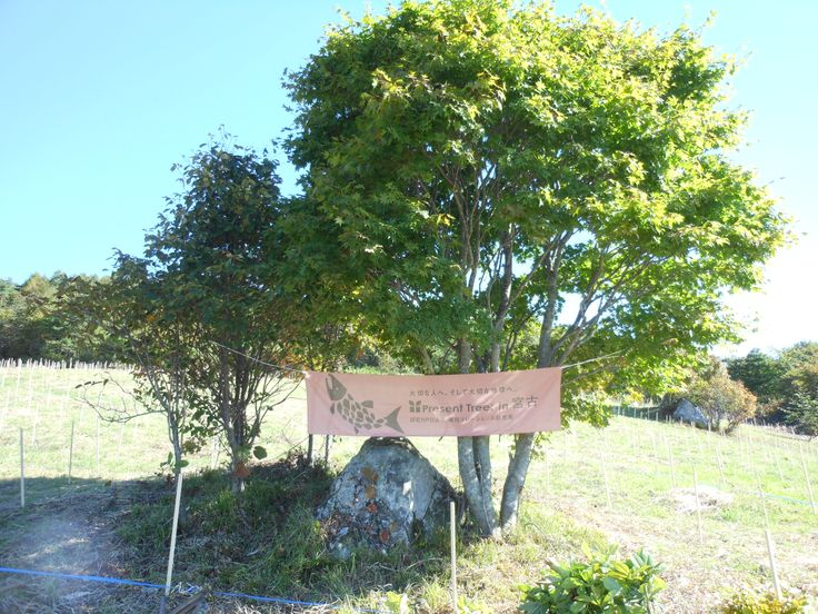 ≪Present Tree in 宮古≫第1回植樹イベント_20121008 Present Tree in 宮古の横断幕が開会式のステージバックです。