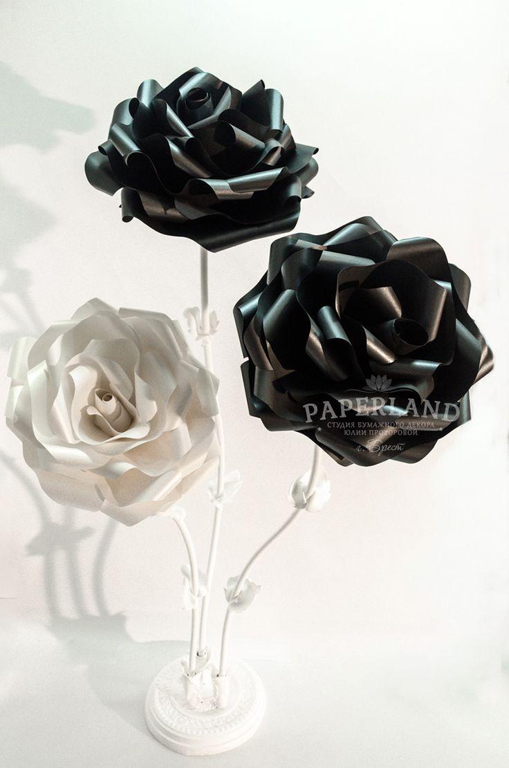 Фото черная роза белая