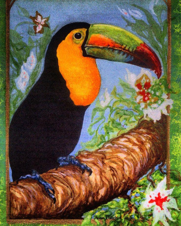 Watercolour study of Toucan