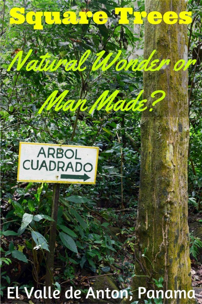 Square trees do exist in El Valle de Anton, Panama. Find out how to see los arbol cuadrados for free! They are located behind a locked gate at Hotel Campestre, with limited hours so check before visiting. Other attractions include the Sunday market, waterfalls, and hiking to the top of the Sleeping Indian Girl, whose lying down body forms the contours of the mountain ridge. You can stay at Windmill Hostel or Bodhi Hostel and Lounge, and eat at Restaurante Tierra y Mar.