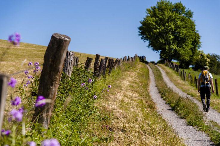 Auf Pilgerpfaden zur Ruhe kommen!  Historische Wanderwege führen durch Niedersachsens schönste Landschaften. Lesen Sie dazu unseren Beitrag hier: http://der-seniorenblog.de/seniorenreisen/reisenachrichten-reisenews/ Bild: djd