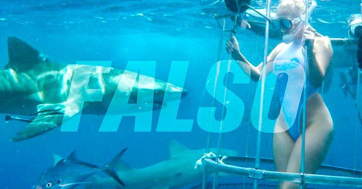 Un video de una actriz de cine para adultos que es presuntamente atacada por un tiburón, se hizo viral hace unos días, pero parece que es un montaje.