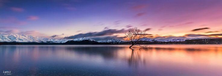 Lovely lone tree at Wanaka NZ.