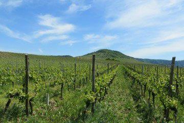 San Juan otra provincia del vino argentino.