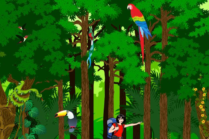 Rainforest Facts For Kids
