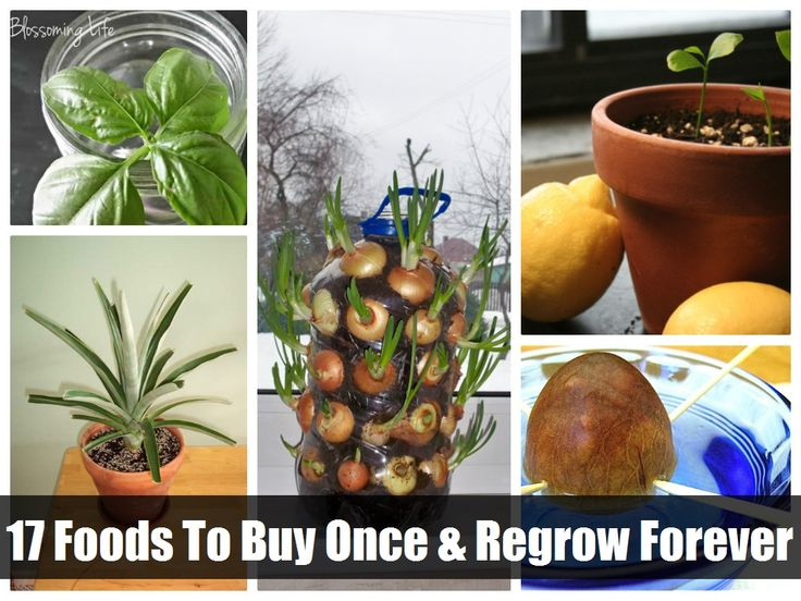 17 food you can buy once and re-grow yourself