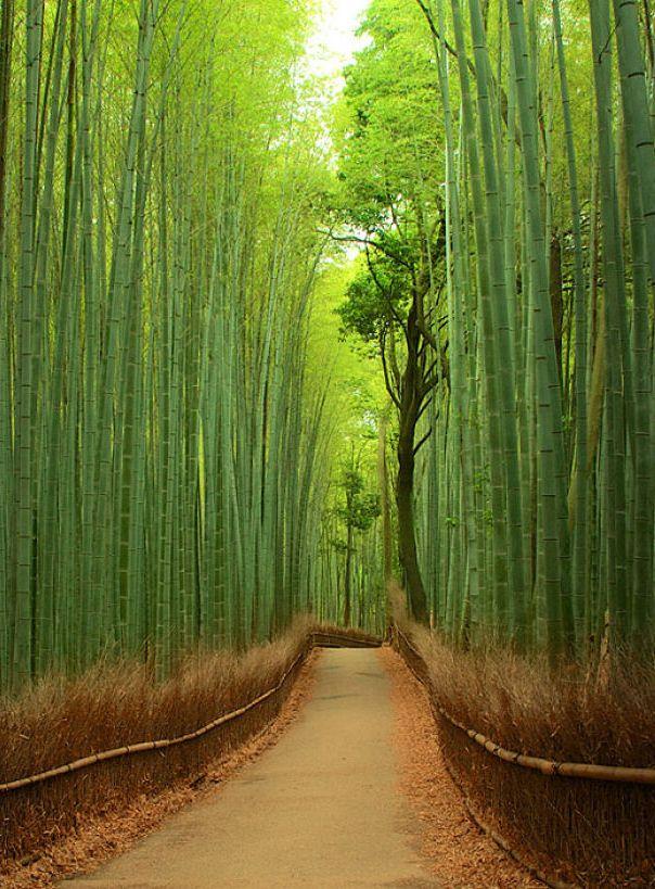 嵯峨野の竹林は、日本の美。きれい