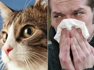Remedies for Cat Allergies - Tips & Advice