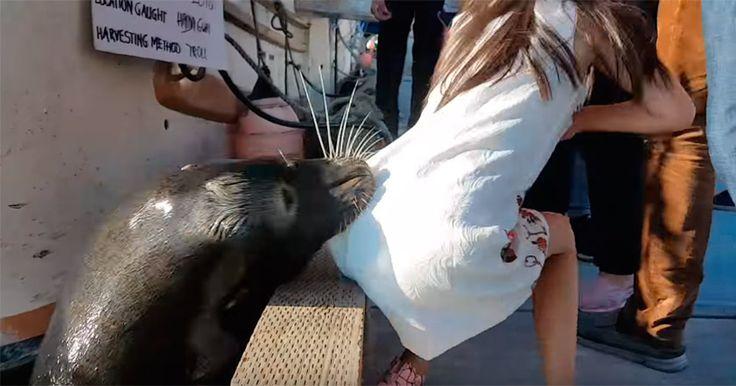В Канаде морской лев напал на девочку и попытался утащить еепод воду.
