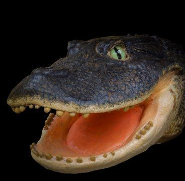 SCIENCE BEATS: Crocodiles rocked pre-Amazonian Peru: Seven crocod...
