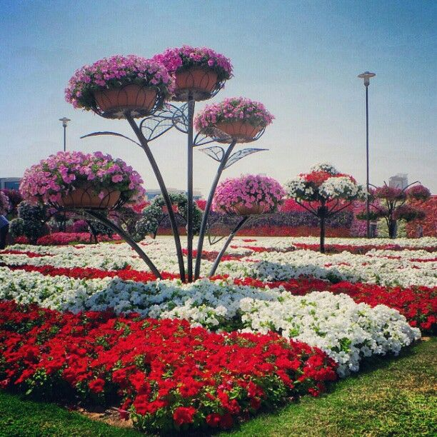 Dubai Miracle Garden. Photography: Abdulla Al-Buqaish