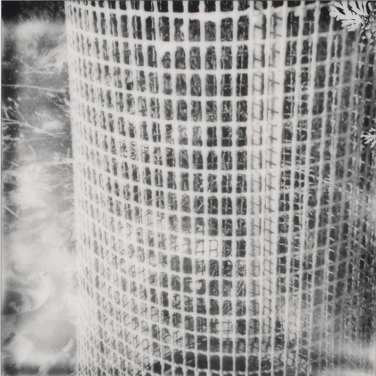 "Get one-of-a-kind #Failaroids photographs from my Facebook shop -> link in bio.  ""社会的セーフティネット (Social safety net)"" How to spend a summer with Impossible's instant analog BW films. Camera: #Polaroid SX-70 Film: Impossible SX-70 BW . . . #ImpossibleProject #instantfilm #InstantPhotography #MakeRealPhotos #safetynet #safety #grid #BW #BlackAndWhite #heyfsc #squaremag #polavoid #PolaroidOfTheDay #PolaroidIsNotDead #analogmagazine #polaroidersitalia #polaroiders #igersitalia @snapitseeit…"