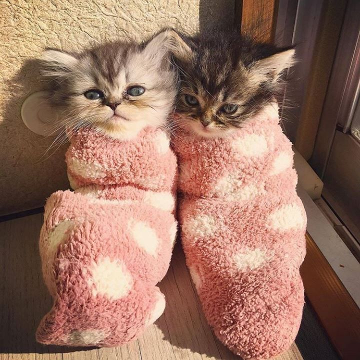 purritos                                                                                                                                                                                 More