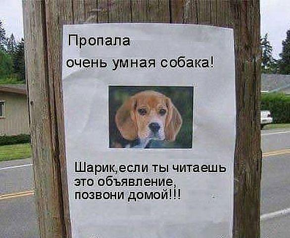 Самые смешные картинки с надписями, добрые смешные картинки, очень смешные картинки до слез