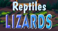 Types of Lizards Video  - Turtle Diary