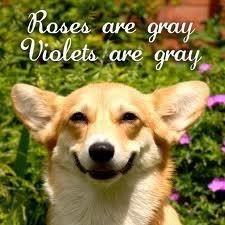 Get it....? :): Rose, Dogs Poems, Color, The Faces, Smile Dogs, Valentines Day, Dogs Humor, Poor Dogs, So Funny