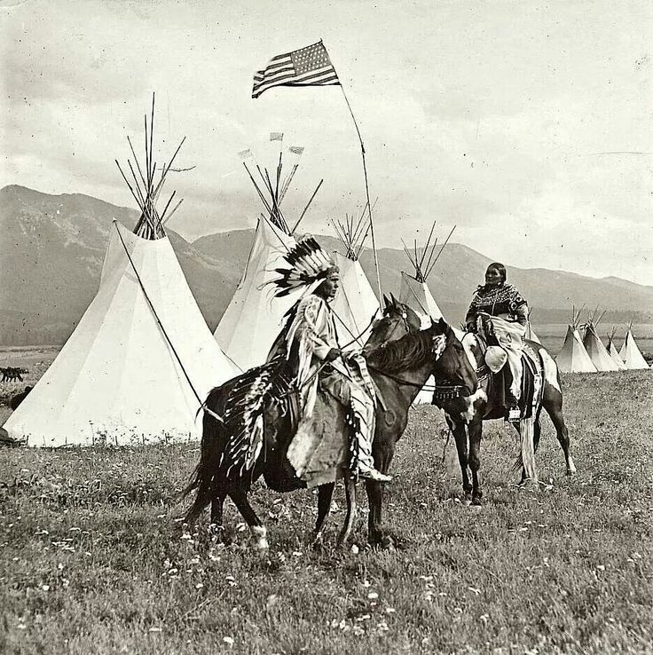 Montana Native Plants: 17 Best Images About Native Horse & Riding Gear On