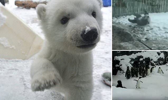 Adorable videos of animals seeing snow for the first time
